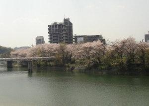 Sakura0703009_1
