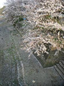 Sakura0703011