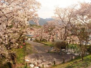 Sakura0703015